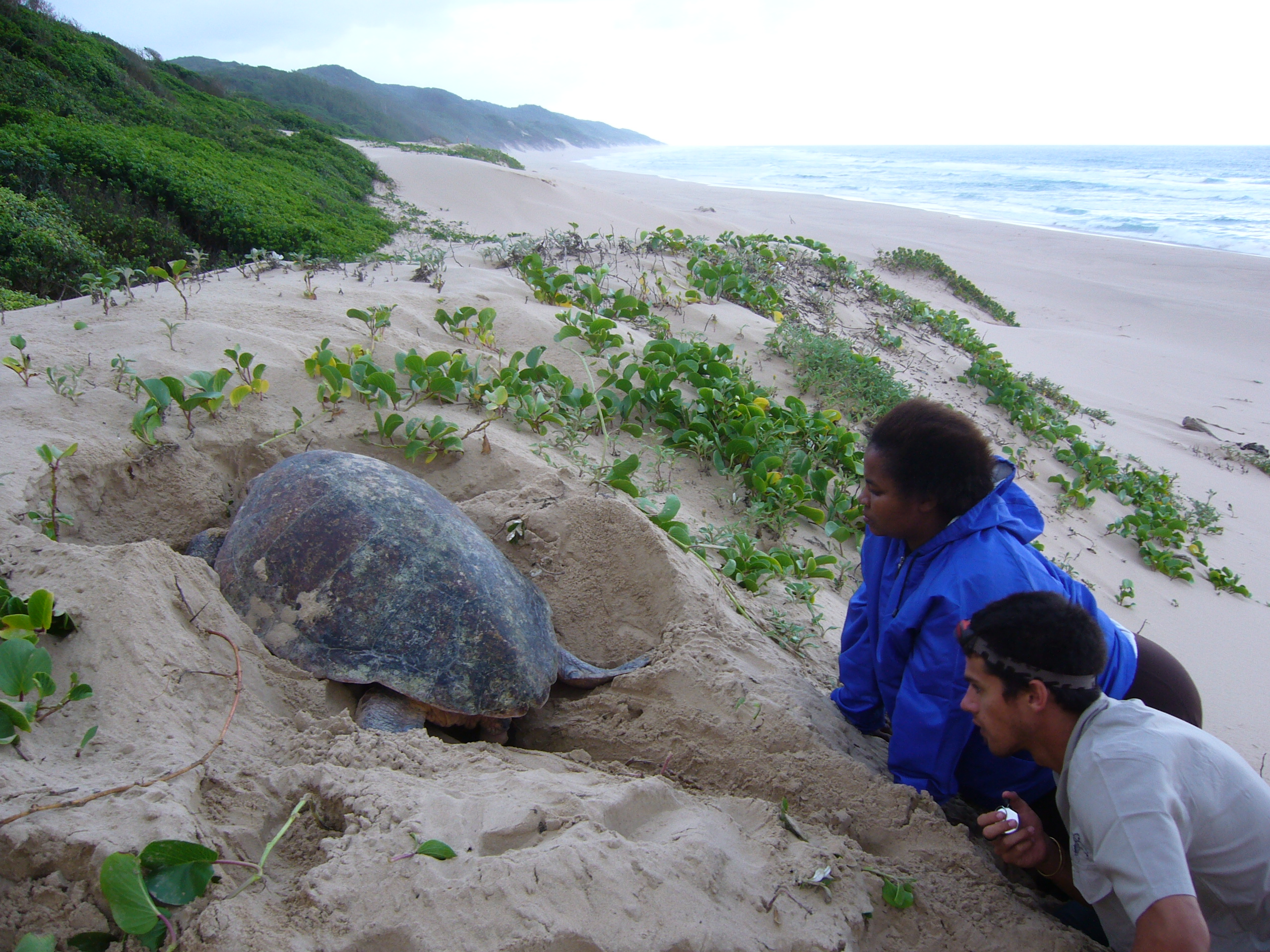 MSc student Chris Boyes counting sea turtle eggs with support from a member of the nearby community.JPG
