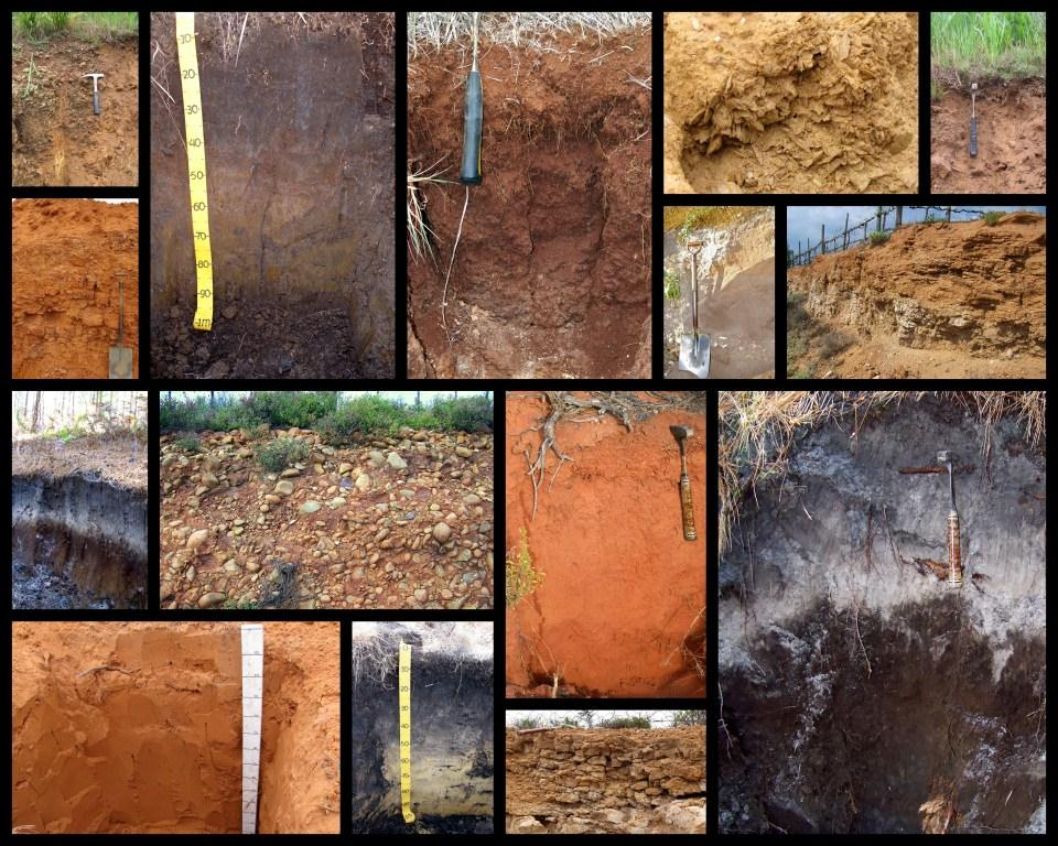SSSSA Soil Collage 2013 (comp).jpg